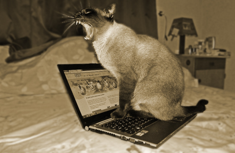 Cat Yawning on laptop